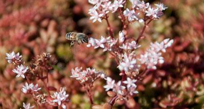 MedO-SI_wildflowers_feature