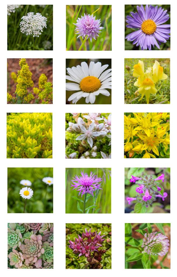 MedO S1 Wildflower Seed Mix