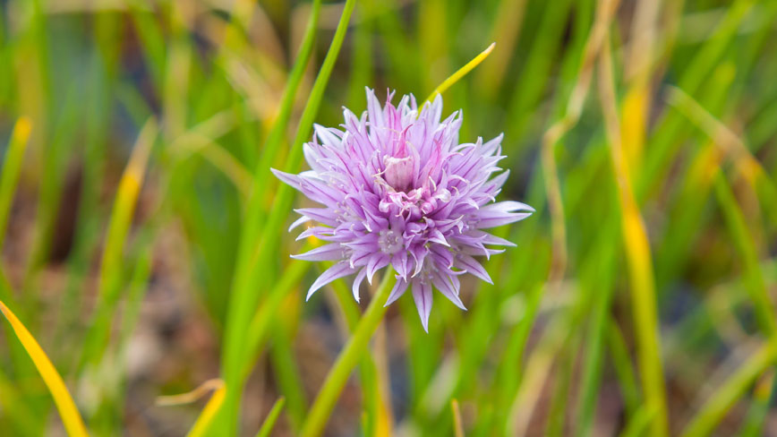 MedO-Willdflower2-1