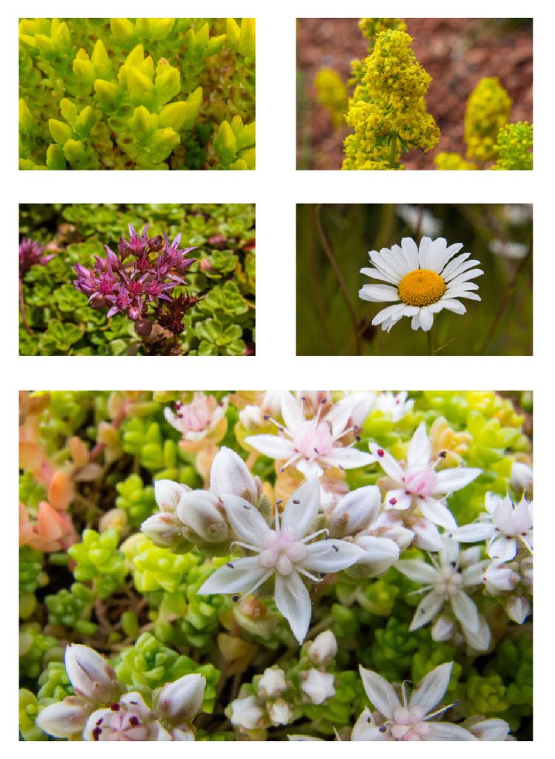 MedO Wildflower & Sedum Mat
