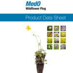 PDS_MedO_Wildflower_Plug