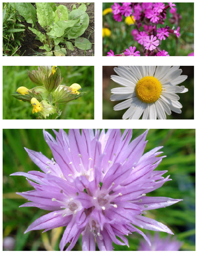 MedO Wildflower Mat